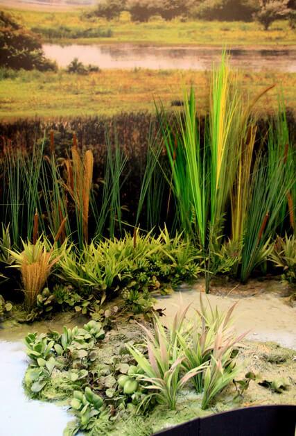 Diorama Habitat